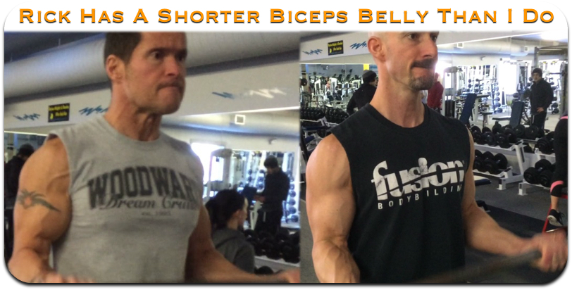 biceps attachment comparisons