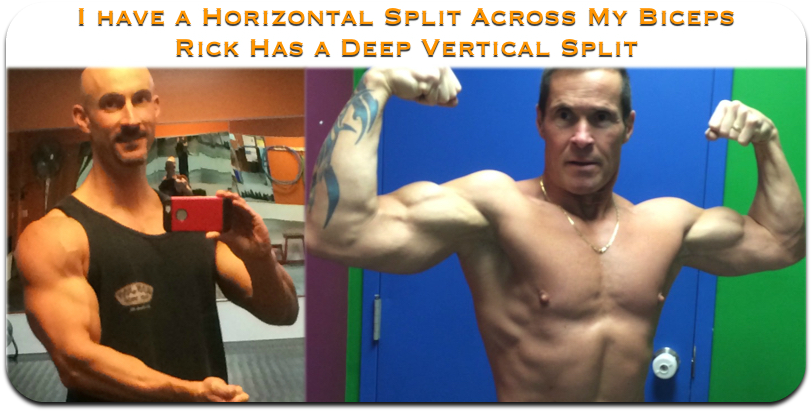 biceps split comparison