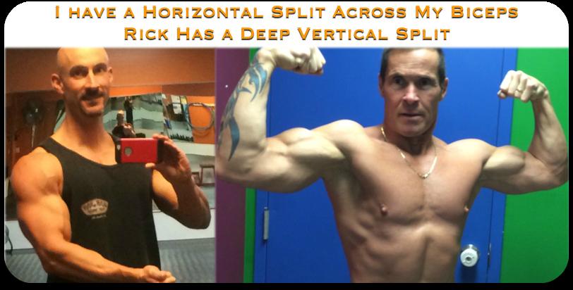 biceps split comparison